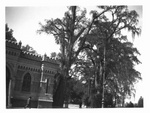 Mexico City, Building, Trees, Entrance to Chapultepec grounds