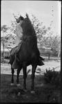El Paso, Texas, horse