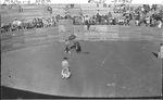 Chihuahua, Madera. Bull fight